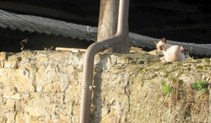 junge katzen auf der steinmauer