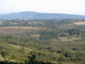 wiesen und wälder