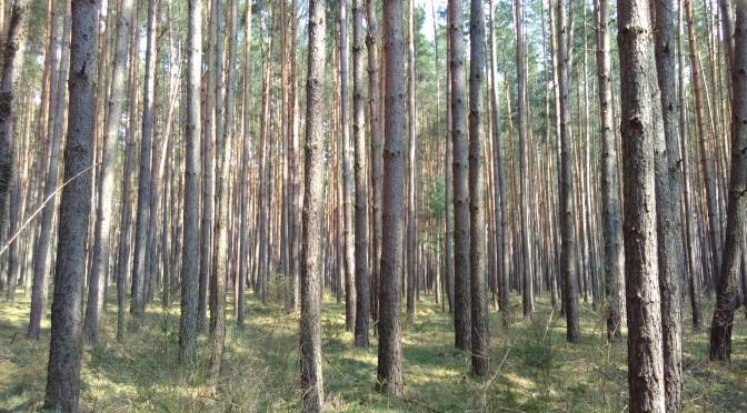 sandige wege und aufgeräumte wälder